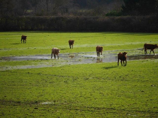 Opération de sauvetage des dernières 60 vaches par la Fondation Brigitte Bardot | Photo Humanimo