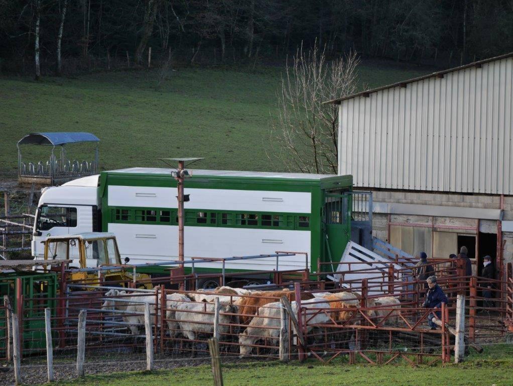 Les vaches maltraitées de Saint-Vit. Opération de sauvetage des dernières 60 vaches par la Fondation Brigitte Bardot | Photo Humanimo